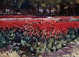 Tulips in their Prime