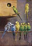 Australian budgerigars in a cage