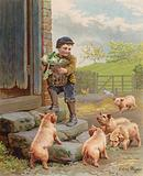 Hungry pigs watching a boy carrying a basket of turnips on a farm