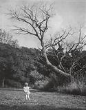 Little girl looking at a tree