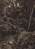 Mexico: Bosque cerca de Mirador, Panorama de floresta virgen