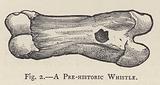 A Pre-historic Whistle