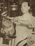 Cat having its fur trimmed