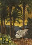 The garden of ancient palms