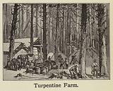 Turpentine Farm