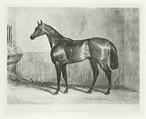 Bloomsbury, foaled 1836
