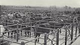 Banbury Cattle Market