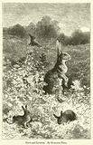 Hares and Leverets