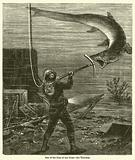 One of the Foes of the Diver, the Thresher