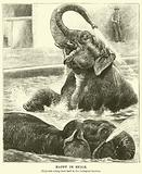 Happy in exile, Elephants taking their bath in the Zoological Gardens