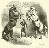 Cirque de l'Imperatrice, Exercice des chevaux russes en liberte, dresses par M Tampe