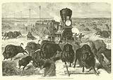 Etats-Unis, La chasse aux buffles, sur le chemin de fer du Pacifique