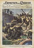 Una guerra di scimmie