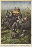 Un sanguinoso duello durante una battuta del Maharajah di Bikanir, in India