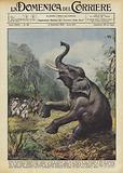 Prima di lasciare la Somalia il Re e andato a caccia di elefanti