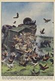 Cento polli in liberta