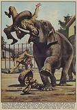 L'elefante nevropatico