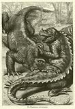 The Megalosaurus and Iguanodon