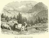 La traite des vaches dans les Alpes