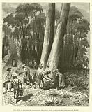 Recolte du caoutchouc dans une foret des bords de l'Amazone au Bresil