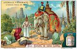 The white elephant of Siam