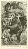 Gorilles Se Construisant Un Abri