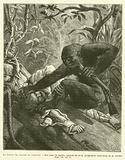 Au Congo, La Chasse Au Gorille