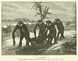 Les Gibbons