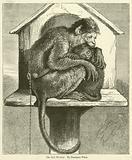 The Sick Monkey
