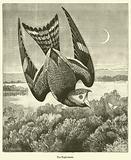 The Night-hawk