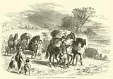 Carrying Bread to London on Pack-Horses