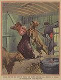 A young woman badly injured by a lion after entering a cage with a lion tamer in Rouen