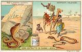 Spitting cobra and horned viper