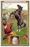 Lassoing a horse