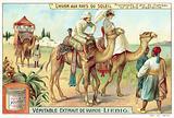 A camel ride on the Algerian coast
