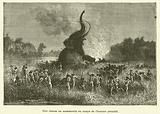 Une chasse au mammouth au temps de l'homme primitif