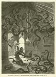 Le Charmeur De Serpents