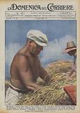 Mussolini, a torso nudo sotto il sole, trebbia il grano dell'Agro Pontino dopo venti secoli …