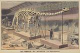 Diplodocus skeleton in a museum