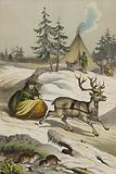 Animals and plants of Lapland