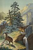 Animals and plants of the Alps