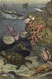 Sea life of the Mediterranean