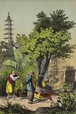 People and plants of China
