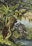 Animals and plants of the islands of Southern Asia