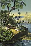 Animals and plants of the Valley of the Nile