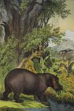 Animals and plants of marsh woodland in the Sudan
