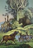 Animals and plants of the Abyssinian hill country