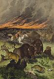 Animals of the North American prairies