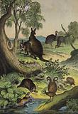 Animals and plants of the Australian interior