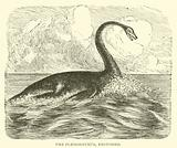 The Plesiosaurus, restored